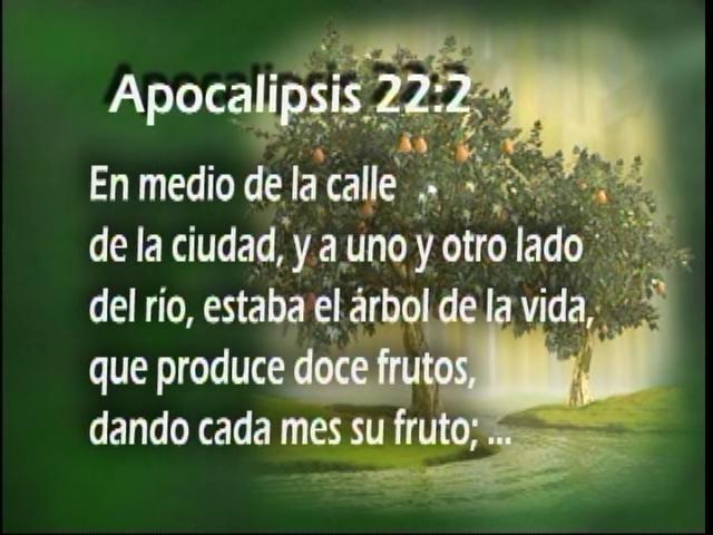 Estudios biblicos y doctrina iglesia de dios 7 bendici n for Medio en el que habitan los arboles