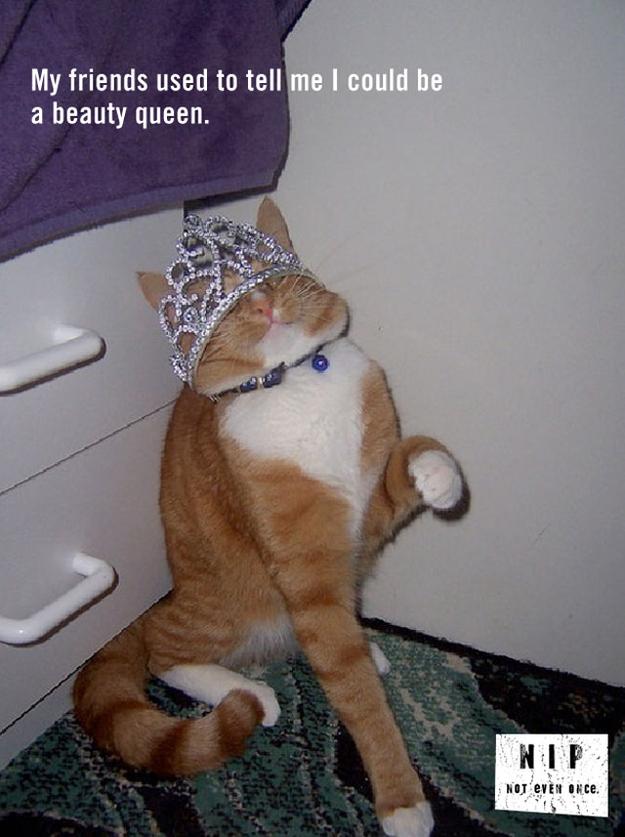funny catnip psas 20 pics amazing creatures
