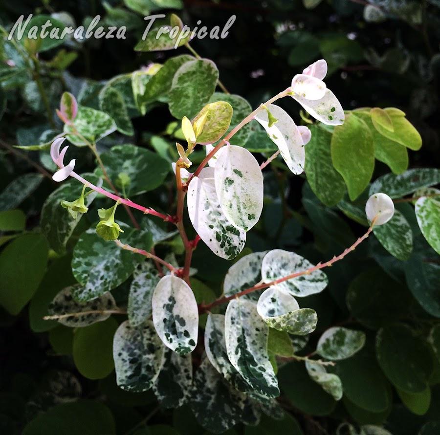 Variegación en hojas de una planta