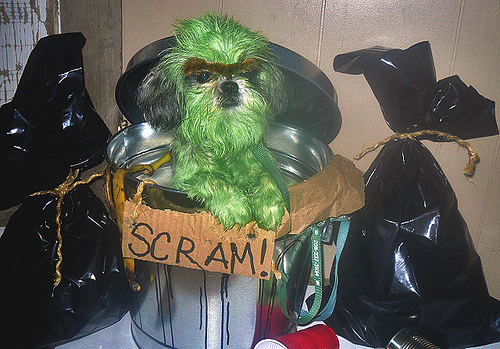 Image: Oscar the Grouch Dog Costume, by Petful / petful.com on Flickr
