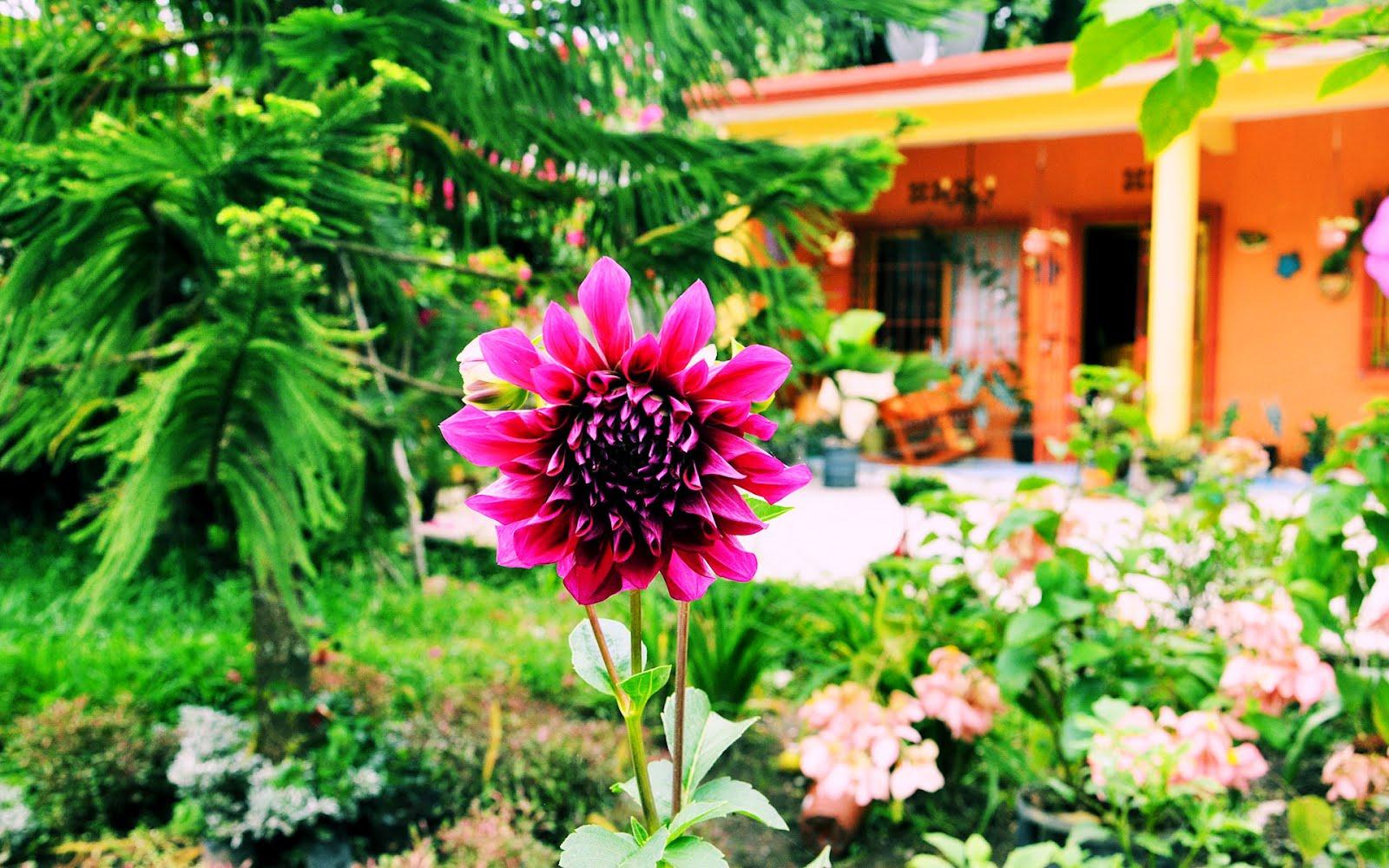 Banco de im genes gratis casita de campo con hermosos - Fotos de jardines ...