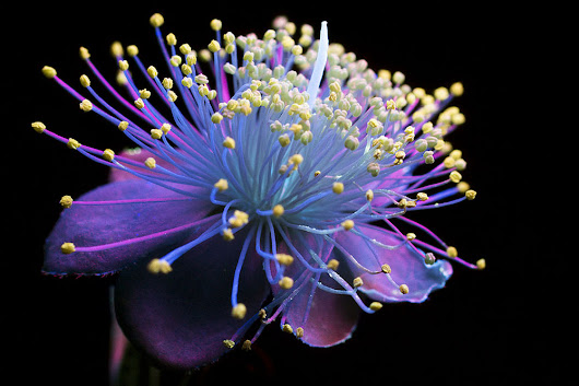 Incredible Pictures of Glowing Flowers