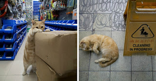 Photographer Documents The Secret Lives Of Cats Living In Hong Kong's Stores