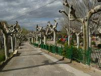 Ainzón -Paseo a Garranguero