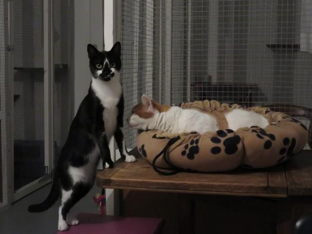 Gratuit noir chatte Galerie