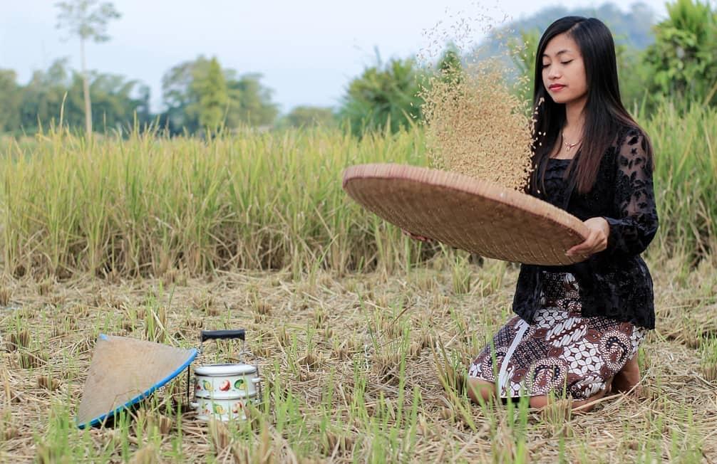 Impor beras; pemerintah sedang melawak