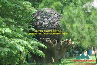 Hutan Sentul