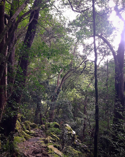 Forest Bathing in Newlands Forest - Photo credit: Keri Muller