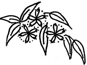 RosalieWakefield-Millefiori: Clematis in Brazilian