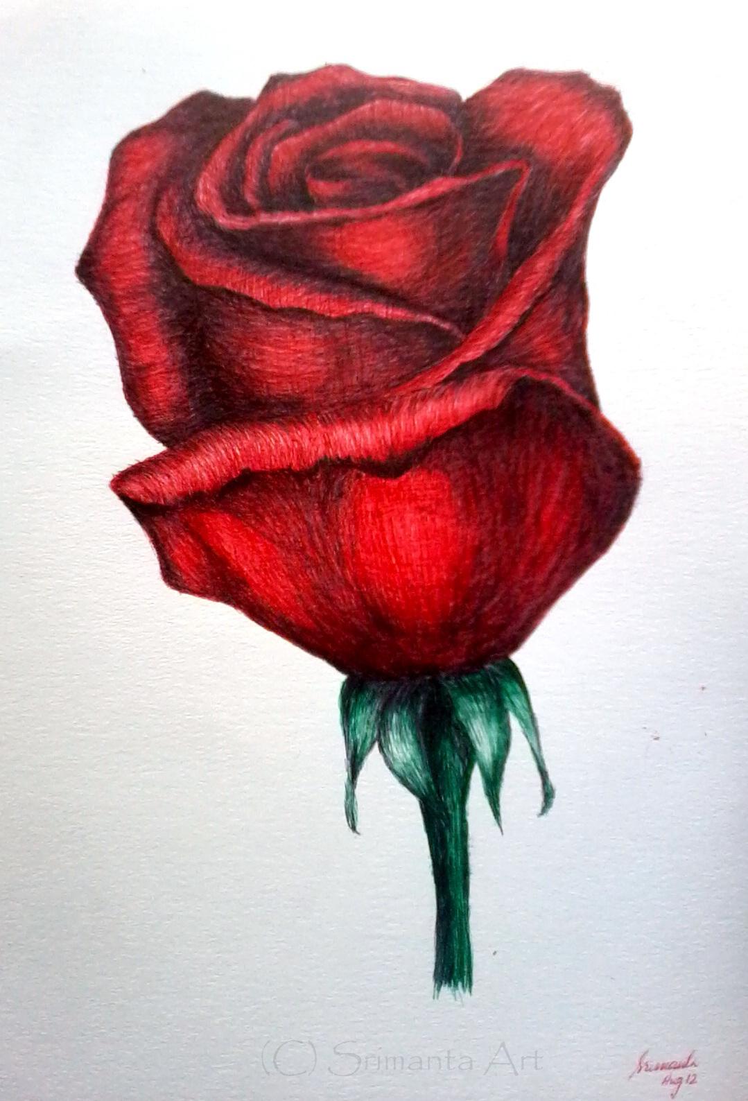 SRIMANT'S SKETCHBOOK: Rose - Ballpoint Pen