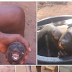 Man Shares Photos Of Monkey He Just Killed That Looks Like Human In PH