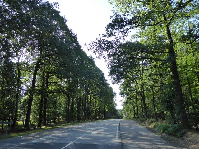Fentb ruta pel bosc