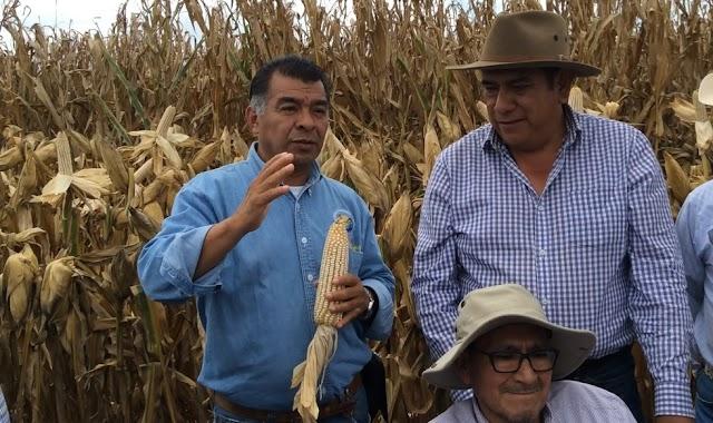CHAPINGO PROMUEVE LA AGRICULTURA DEL FUTURO PARA ENFRENTAR CAMBIO CLIMÁTICO Y PRODUCIR ALIMENTOS SANOS