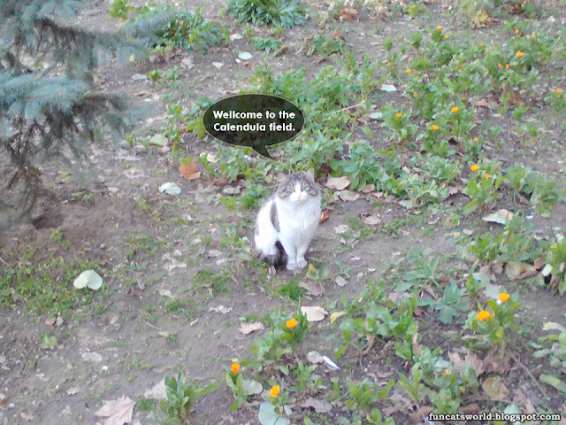 Cat and Calendula