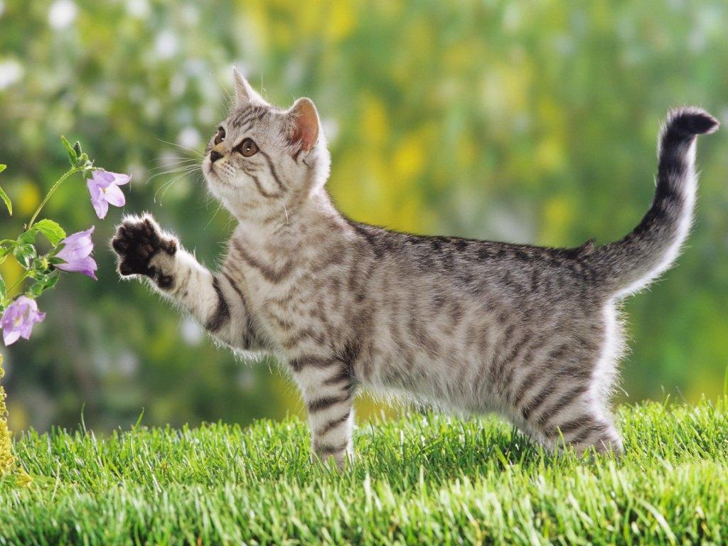 20 Gambar Kucing Dan Anak Kucing Lucu Wallpapersforfree
