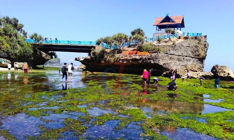 Pesona Lantai Karang Pantai Kukup Gunung Kidul Yogyakarta Eksotis Jogja