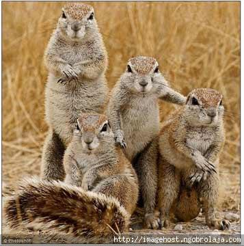 Gambar Tupai Binatang Kesukaan Ku  Dunia Binatang