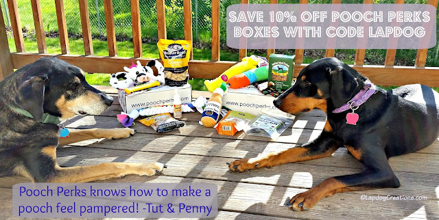 #PoochPerks knows how to make a pooch feel pampered! - Tut & Penny SAVE 10% with their special code LAPDOG when you subscribe! #dogbox #rescuedog #dogtoys #dogtreats #LapdogCreations ©LapdogCreations