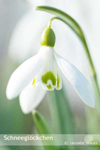 Frühlingsblüher für die Bepflanzung Blumenbeet und Rabatten