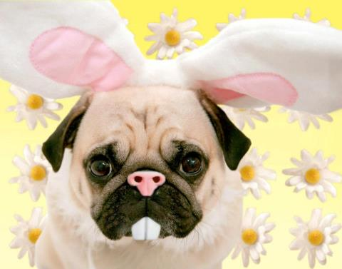 Rugs And Pugs Easter Humor