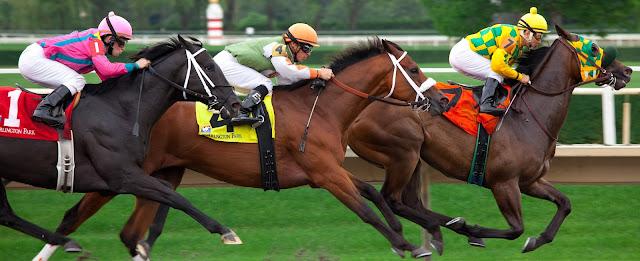 Photo montrant trois chevaux de courses durant une manifestation sportive