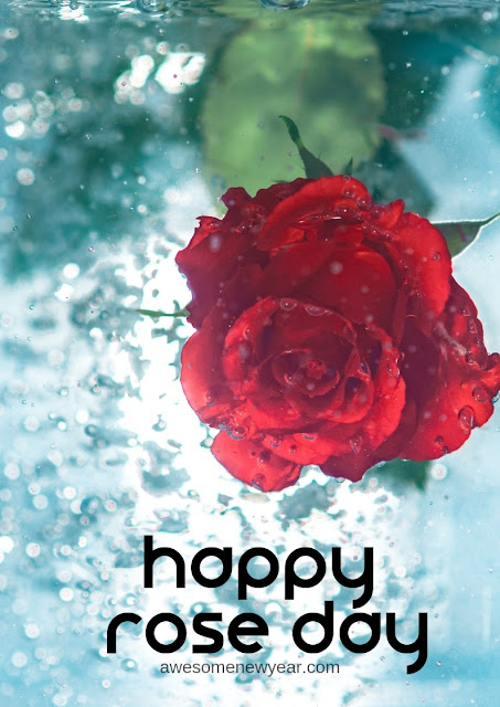 Happy-Rose-Day-Images-HD