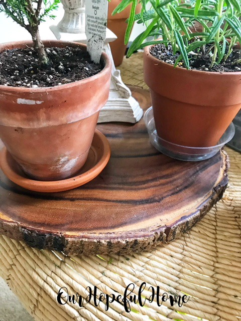 terra cotta clay pot weathered rosemary herb houseplant wood slice