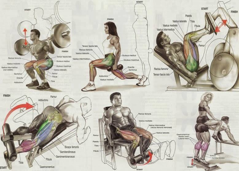 Lower body exercises for bodybuilding all