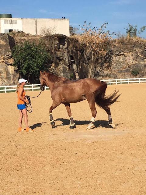 Renunció a las olimpiadas de río 2016 para salvar la vida a su caballo