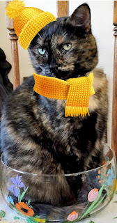 Real Cat Paisley decked out in yellow hat & scarf.