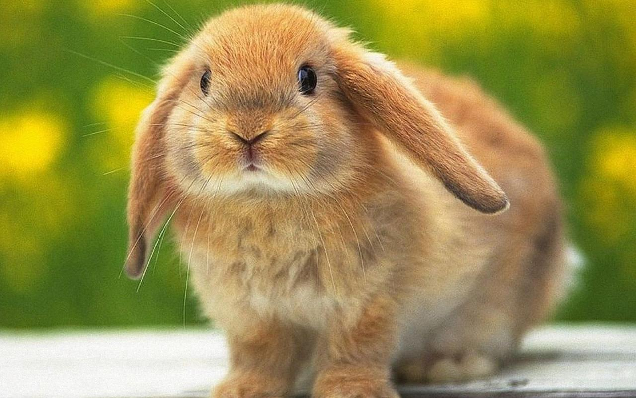 Rabbit | Lovely and Cute Animal | Animals Lover
