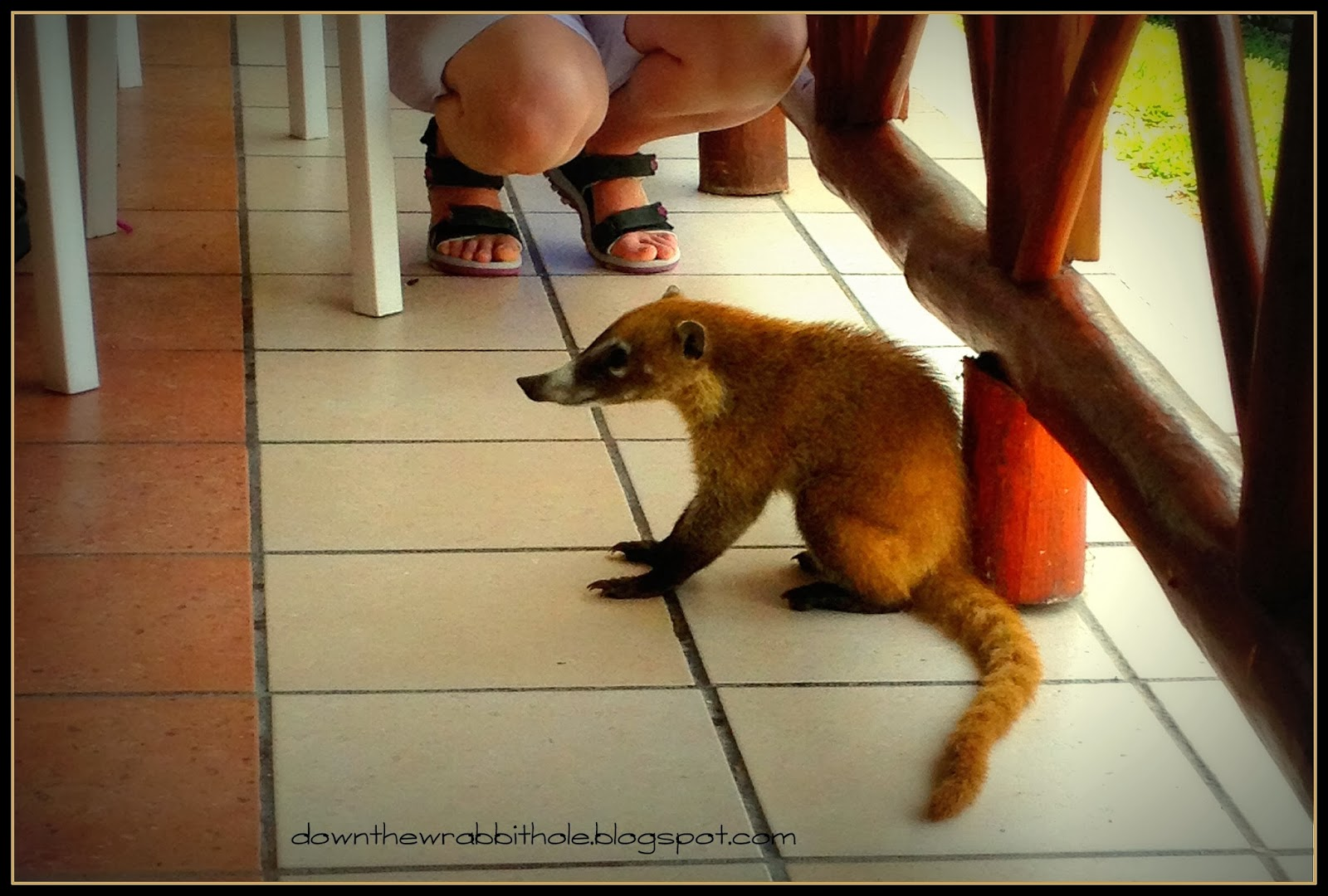 You can get pictures taken with many different animals ... |Grand Bahia Principe Tulum Animals