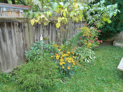Riverdale backyard Toronto fall clean up before by Paul Jung Gardening Services