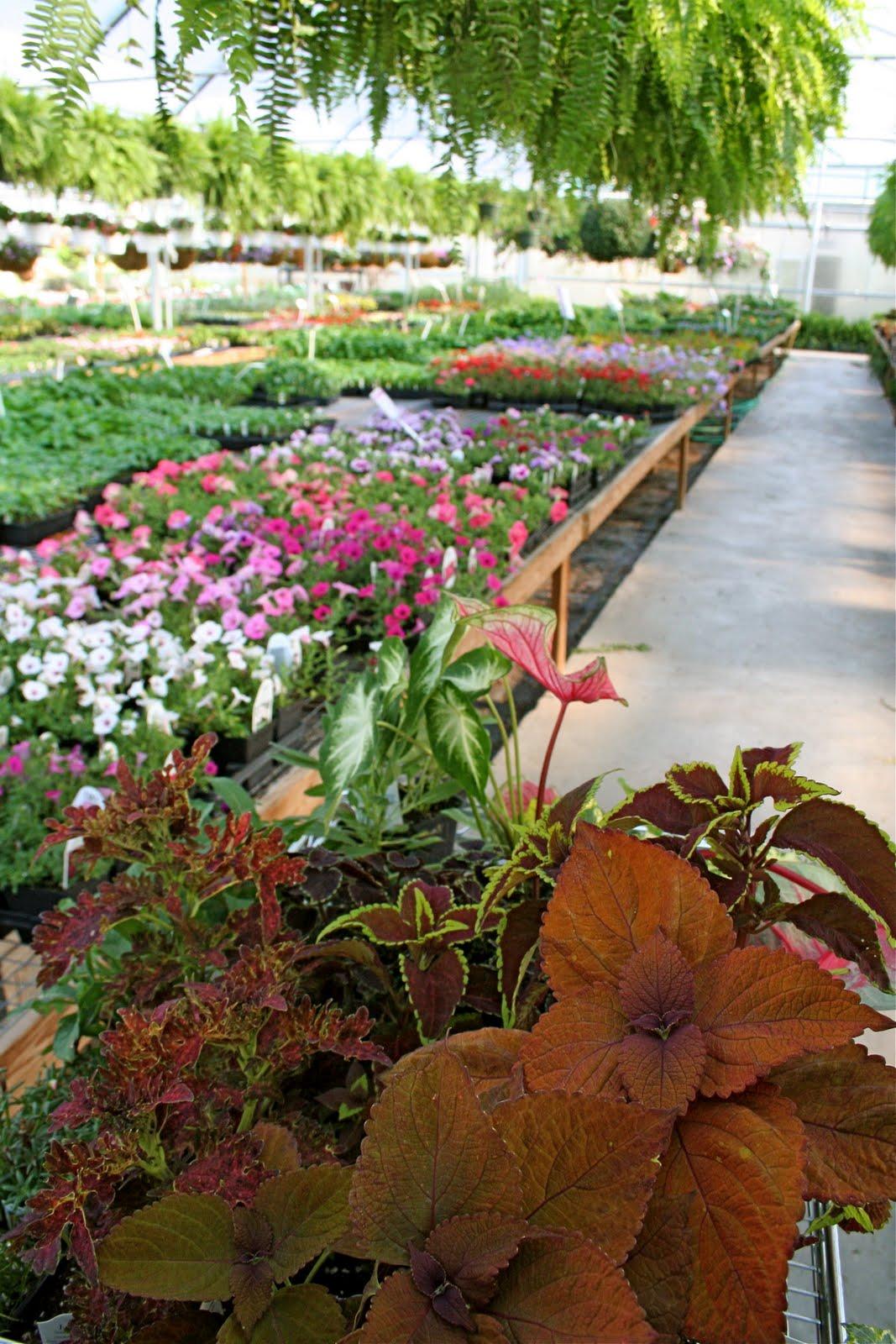 Homestead Is A Large Garden Center That Carries Garden Tools, Sprays,  Fertilizers, Pots, Birdhouses, Feeders, Wind Chimes, Soils, ...