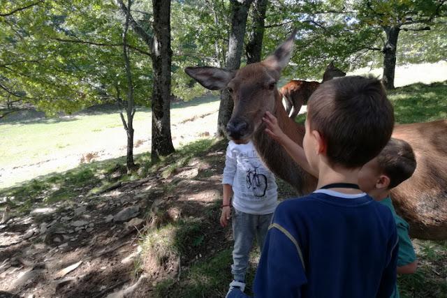 parchi con animali per bambini
