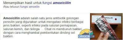 Cara obati lovebird snot dengan obat amoxilin