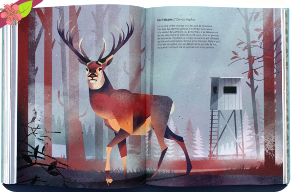 Animaux sauvages, voyage en terres du nord de Dieter Braun - éditions Milan