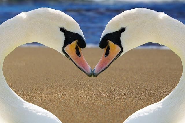 ciuman dapat memperbaiki kesehatan gigi
