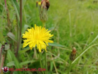 Bunga Rumput Di Kawasan Sejuk