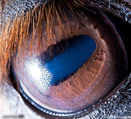 شاهدوا روعة التصوير لعيون حيوانات مقربة جدا 10.jpg
