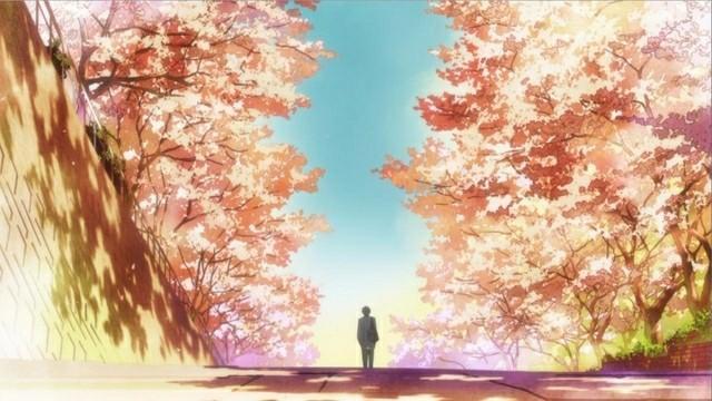 Kimi Ni Todoke Cherry Blossom