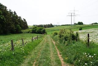Ein gemütlicher Wanderweg führt zwischen Feldern und Wiesen hindurch