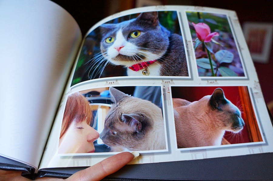 A Tonk's Tail    err, Tale   : Fun Find Review and Giveaway: Kodak
