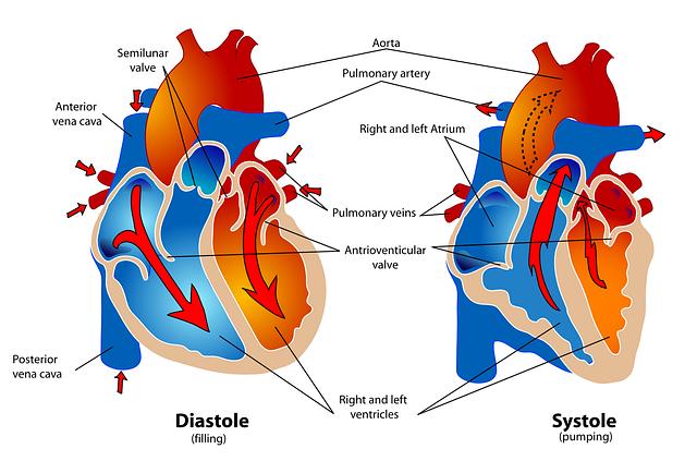 11 Tanda Yang Mengisyaratkan Bahwa Jantung Anda Dalam Masalah