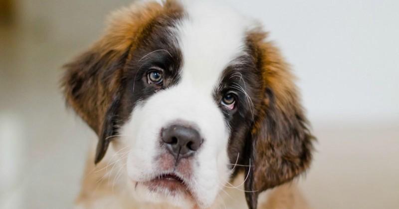Οι 10 ευχές του σκύλου μας...