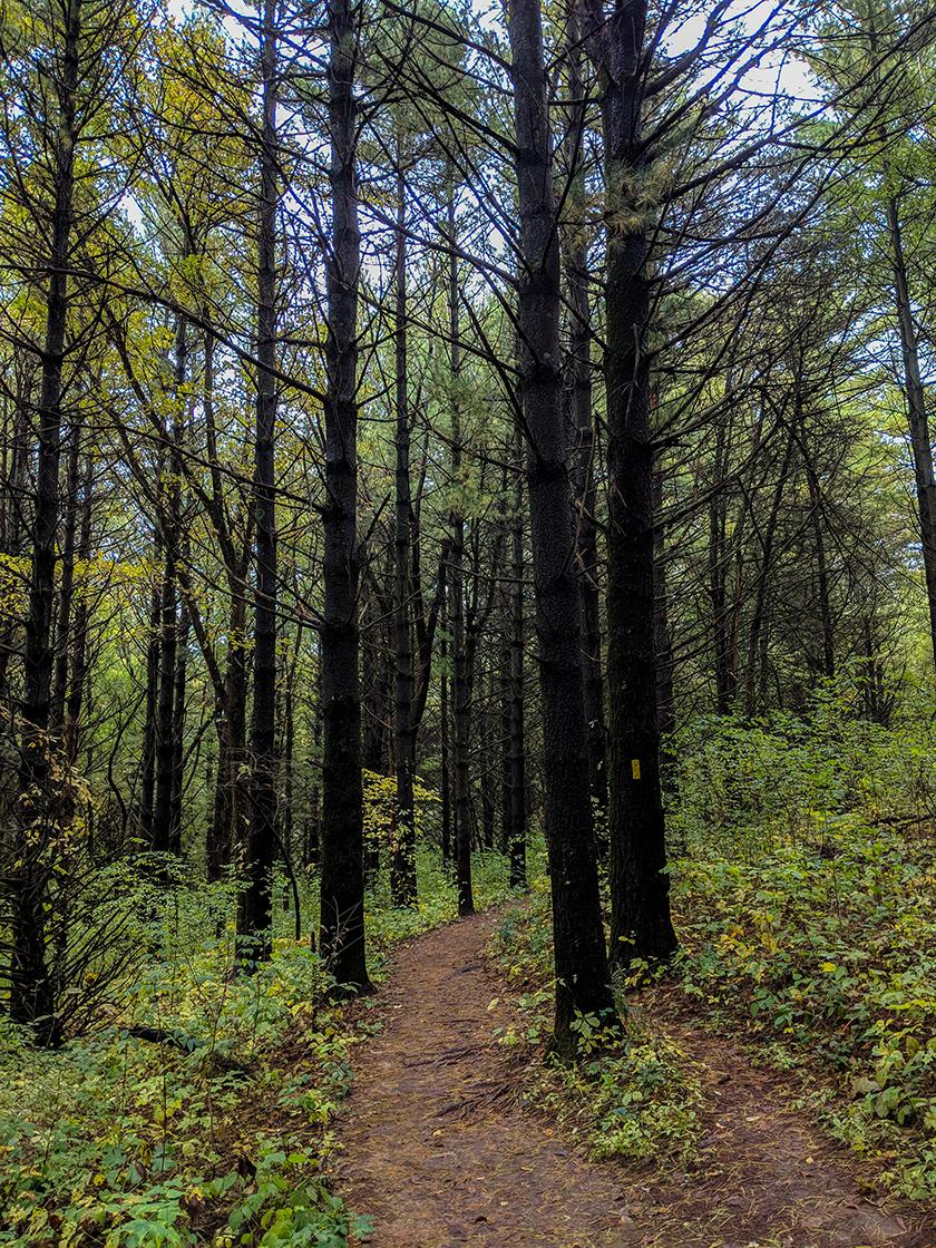 wet environment trail cutting through pine trees