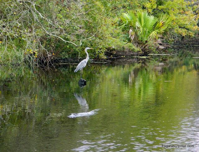 Garça, fauna nativa dos pântanos da Luisiana