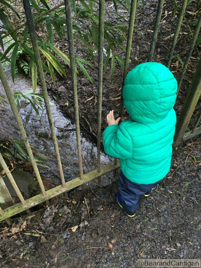 A Wish, A Kiss and a Dragon. Toddler looking through railings at a stream