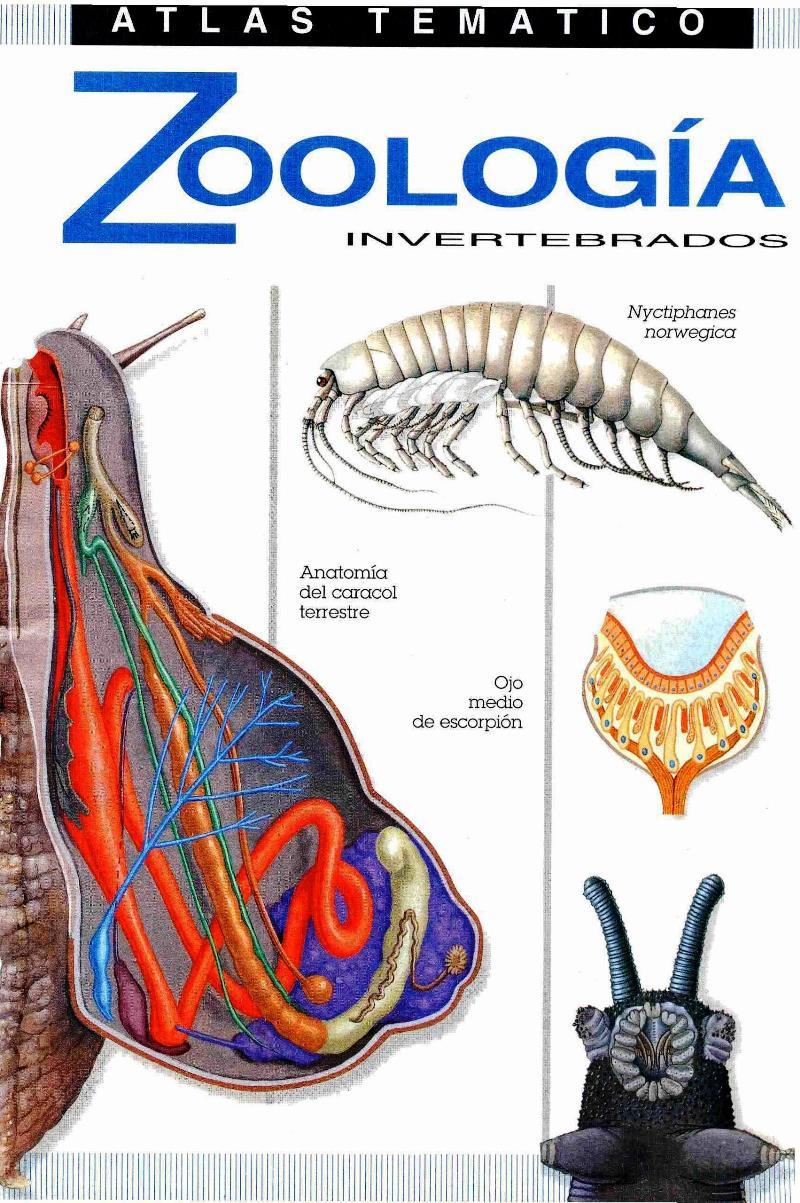 Atlas Temático de Zoología Invertebrados