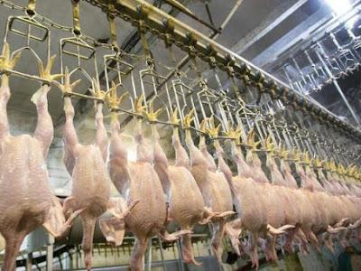 Στη Βρετανία σύντομα ίσως τρώνε κοτόπουλα πλυμένα με χλωρίνη – Ήδη τρέφονται με αυτά στις ΗΠΑ
